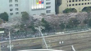 ルフロン公園の桜|川崎駅西口のビルから