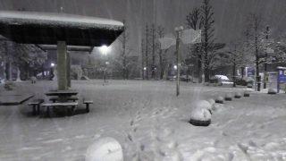 公園の雪景色 川崎市幸区某所
