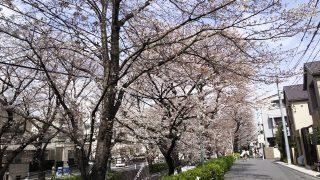 桜橋の側道から|桜坂(東京都大田区)