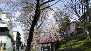 桜橋を下から|桜坂(東京都大田区)
