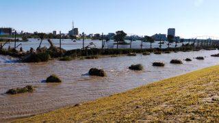 多摩川河川敷(川崎リバーサイドパーク付近:2019年10月13日 午前)
