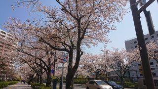 桜(川崎駅西口)