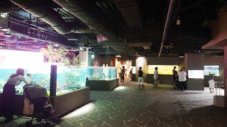 昼間の水槽・その1|川崎水族館