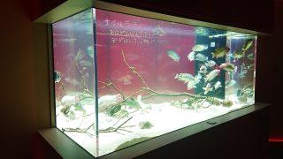 昼間の水槽・その2|川崎水族館