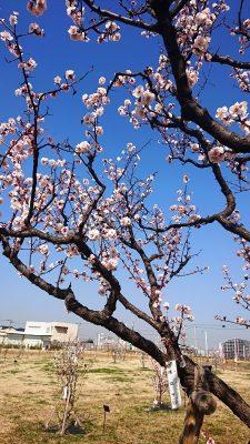確認中のピンクの花|御幸公園