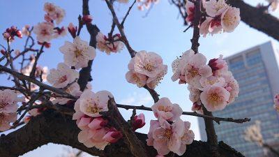 確認中のピンクの花(アップ)|御幸公園