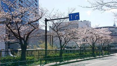 桜の風景|ラゾーナ川崎の線路側・その2