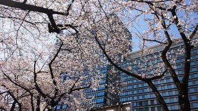 桜の風景|ルフロン公園・その2