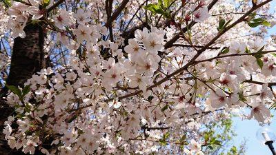 ピンクの花|南河原公園