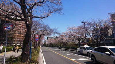 桜の風景|ラゾーナ川崎の線路側・その1