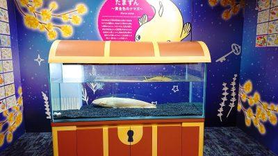 たまずんの水槽|カワスイ(川崎水族館)